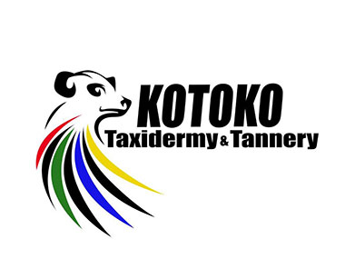 Kotoko Taxidermy - The volume of projects Kotoko Taxidermy received over the years, from hunters and clients all over the world, indicates the good relationship and trust our clients have built up in Kotoko Taxidermy.